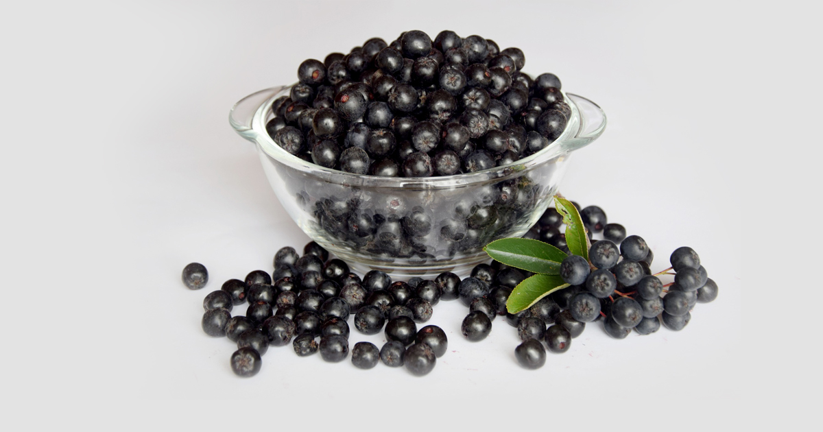 Fresh Aronia Berries